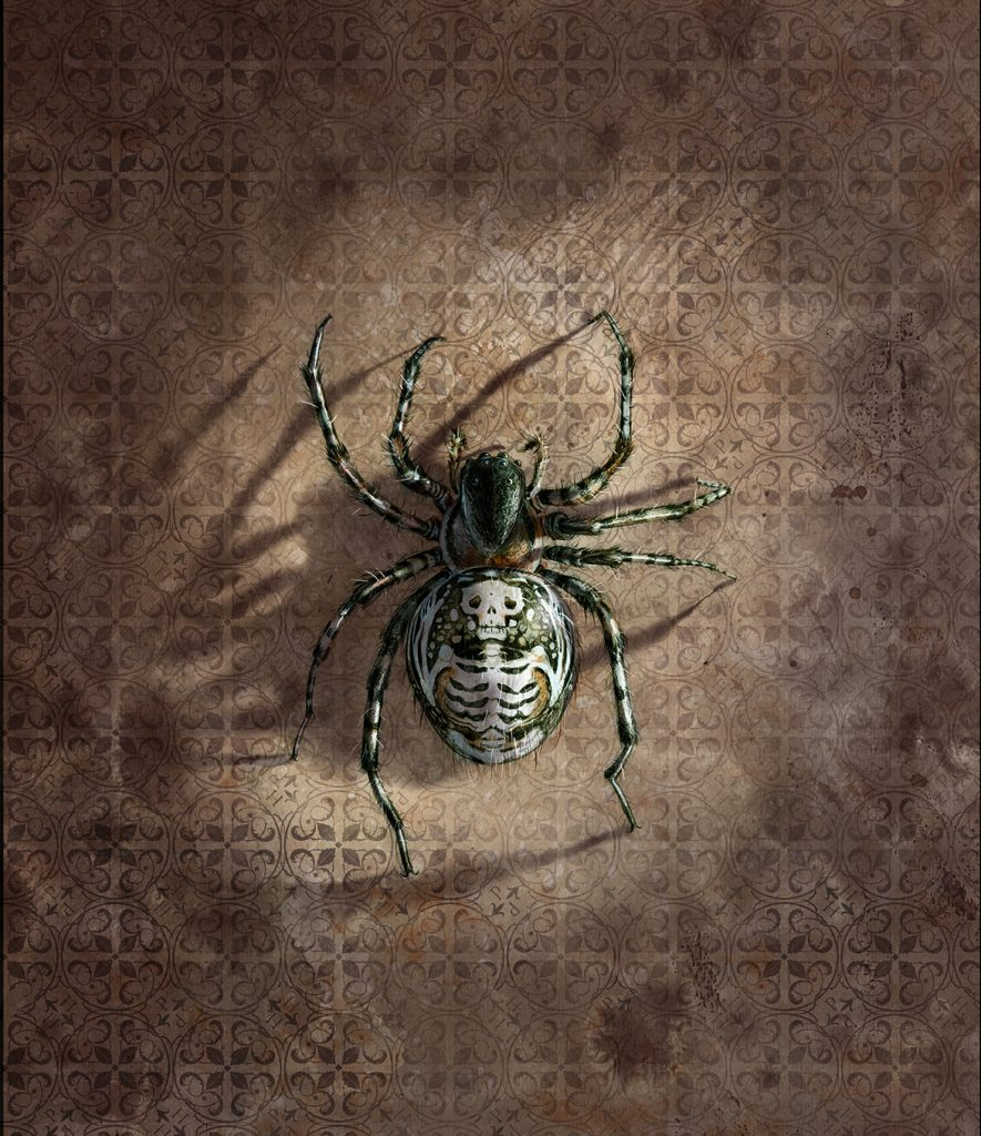 Spider-with-shadow