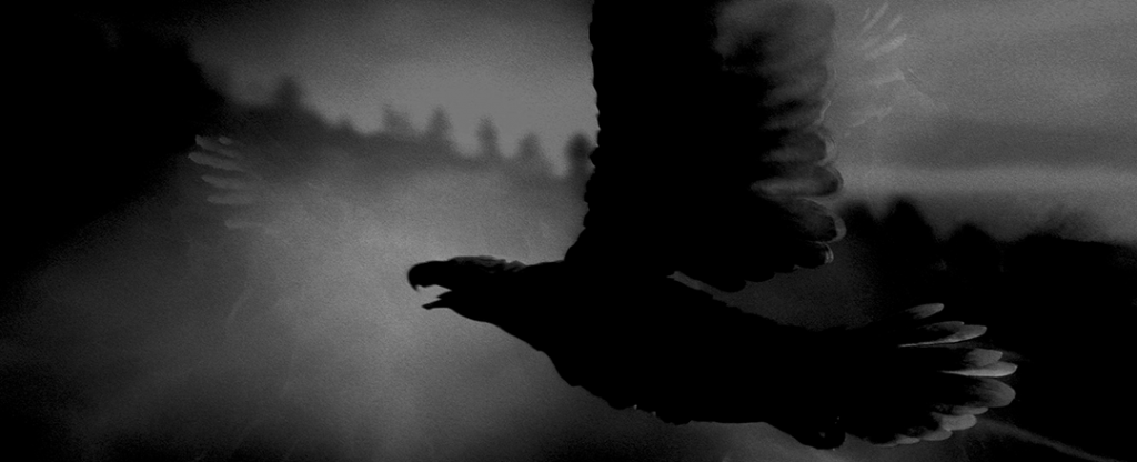 img1_bird