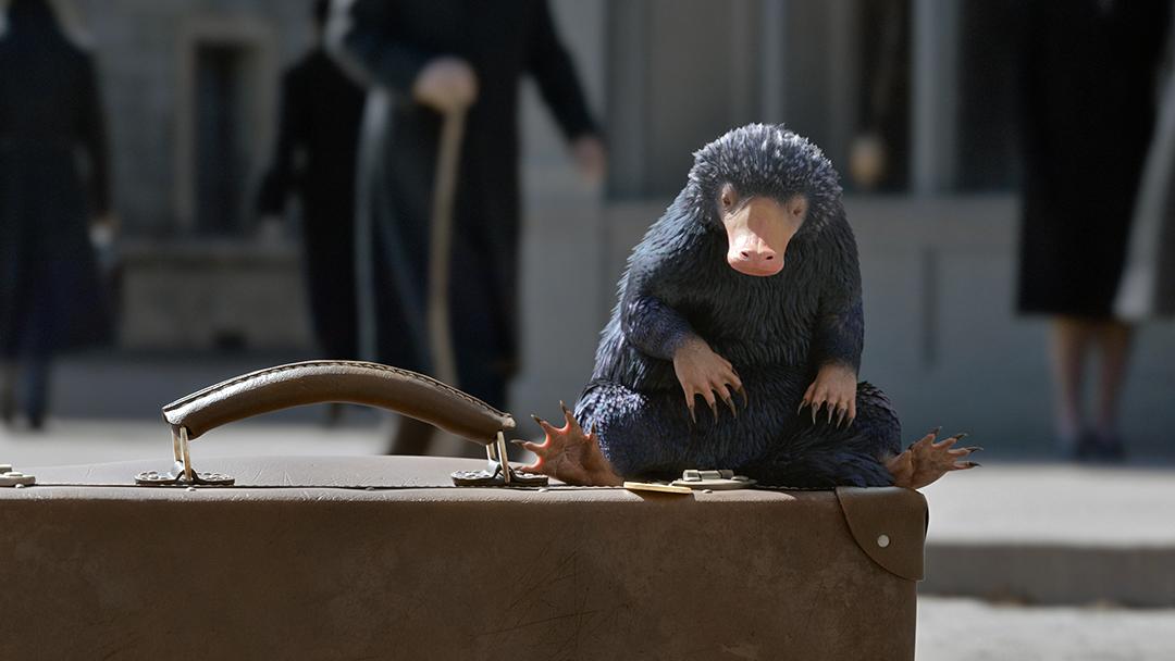 Num frame do trailer, o pelúcio aparece saindo da maleta de Newt no meio de uma rua movimentada.