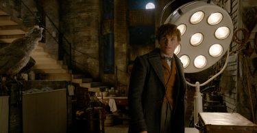 Newt em seu porão. Ele parece um pouco encabulado. Podemos ver a Lua pela janela e um agoureiro. Atrás de Newt, há um refletor com várias luzes e, numa mesa, sua maleta está fechada.