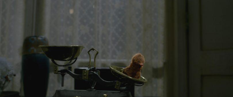 Um pelúcio filhote está em cima de um dos lados de uma balança manual, junto com um pequeno peso. Esse pelúcio é marrom e