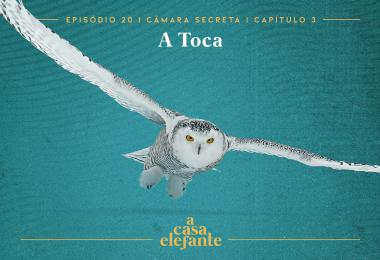 Capa do episódio. Nela, há texto com as informações do episódio e Edwiges, uma coruja-da-neve, com as asas abertas, voando. O fundo é verde-água.